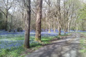 Of Bluebells and Practisers